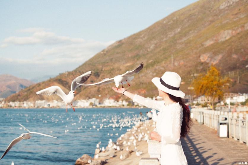 大理洱海看海鸥地方在哪里