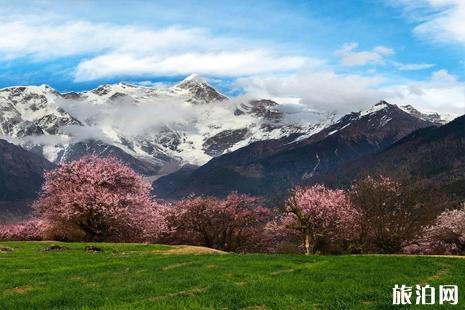 西藏雅鲁藏布大峡谷桃花最佳拍摄点