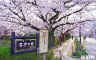京都小众樱花旅游景点推荐