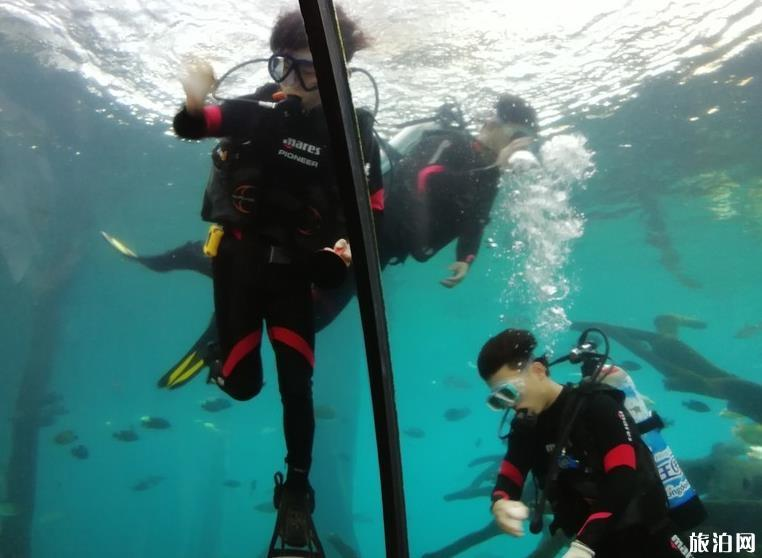 珠海长隆海洋国王有什么好玩的项目推荐