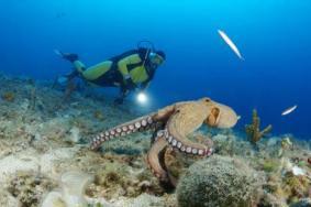 菲律賓考潛水證哪里好 菲律賓潛水圣地