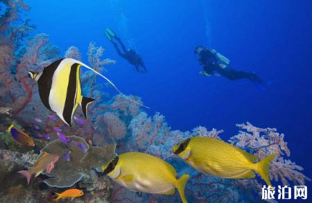 2019巴厘岛图蓝本潜水攻略