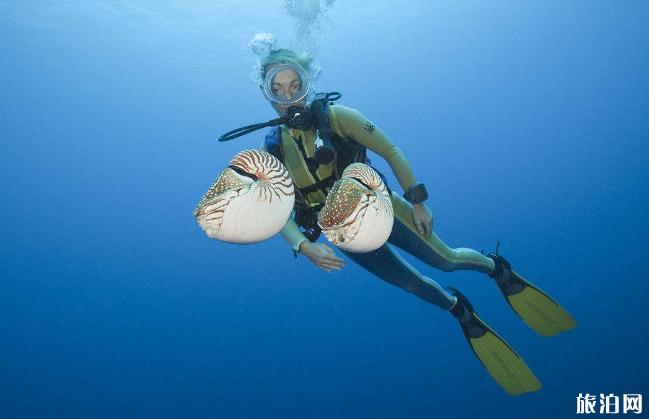 仙本那适合潜水考证吗 仙本那考潜水证攻略