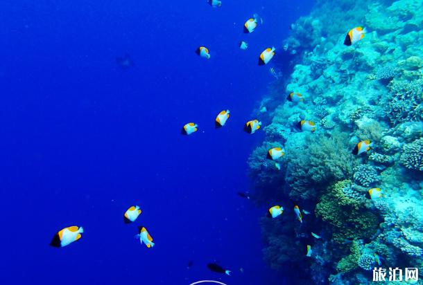 水下拍照用什么相机 相机水下如何拍照