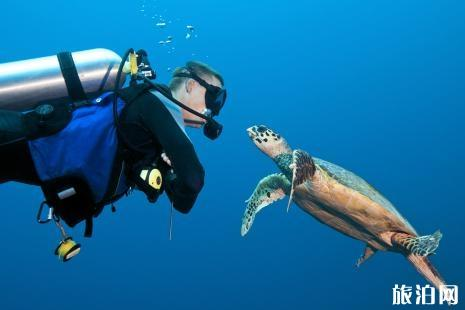 新手潜水注意事项 潜水有危险吗