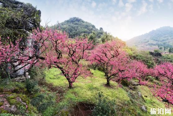 西安桃花几月份开 桃溪堡现在有桃花吗 2019西安桃花观赏地点+花期+票价
