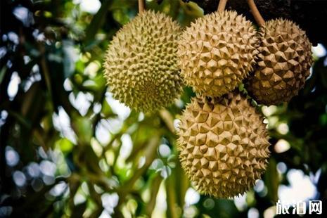 马来西亚榴莲哪里的最正宗 马来西亚哪里吃榴莲
