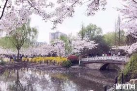 2019上海赏樱花的地方整理