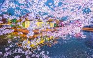 黿頭渚風景區 太湖黿頭渚風景區門票價格 黿頭渚櫻花最佳觀賞期