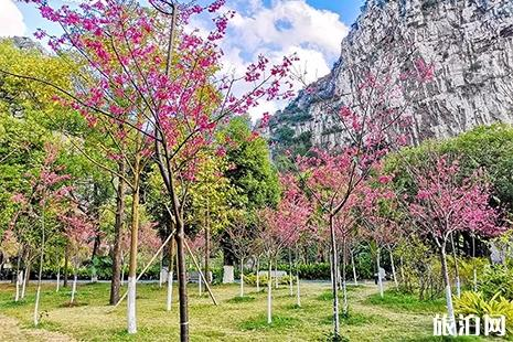 2019四月桂林看花的地方 桂林赏花地点推荐