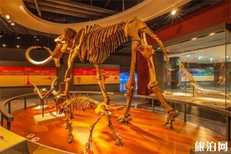 上海自然博物館門票 上海自然博物館地址 上海自然博物館開放時間