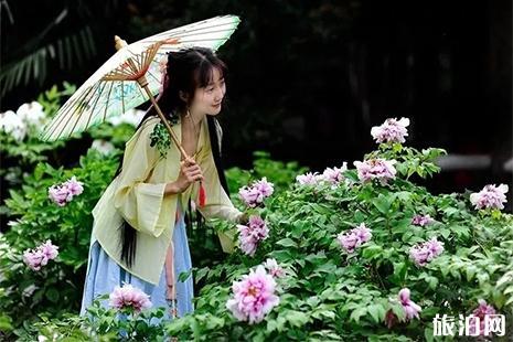 2019枣庄薛国百花园牡丹花节4月13日开启