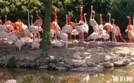 上海野生動物園門票 上海野生動物園營業時間 上海野生動物園攻略