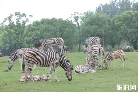 上海野生动物园门票 上海野生动物园营业时间 上海野生动物园攻略