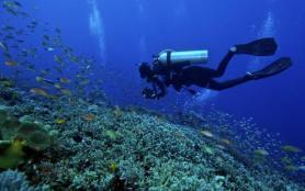 潜水有几种类型 什么是自由潜水