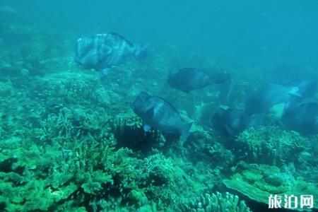 沙巴潜水店哪家好 沙巴哪里能潜水