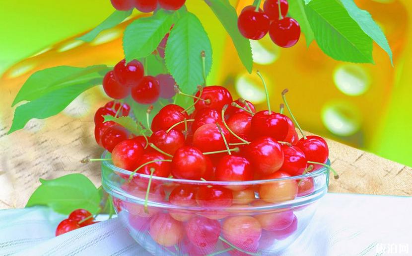 洛陽哪里有摘櫻桃的地方 2019洛陽櫻桃采摘園最佳采摘時間+價格+交通