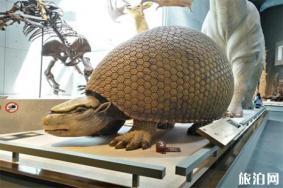 2019上海大自然野生昆虫馆博物馆日半价优惠信息