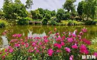 鵝湖玫瑰文化園門票 鵝湖玫瑰文化園好玩嗎 鵝湖玫瑰文化園游玩攻略