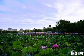 北京莲花池公园收费吗