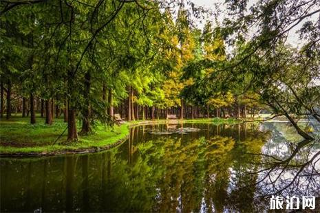 2019上海共青森林公园端午节活动内容