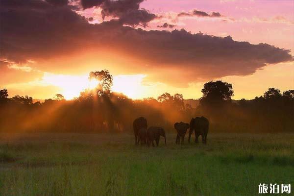 夏天非洲旅游景点 非洲最佳旅游时间