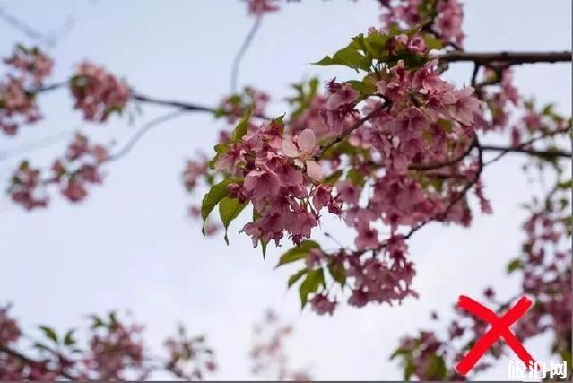 花卉攝影秘籍 拍攝花卉的技巧