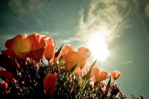 花卉摄影秘籍 拍摄花卉的技巧