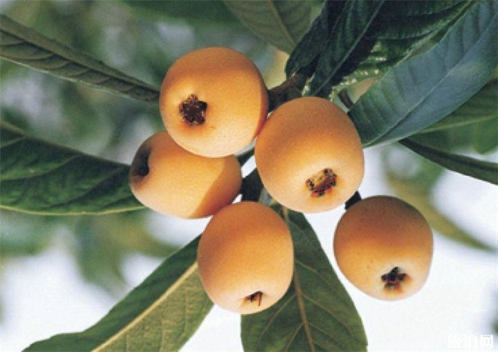 2019桂林水果采摘基地价格+地址+交通