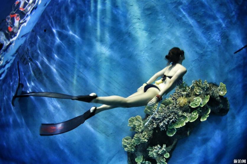 潜水证ow和aow什么区别