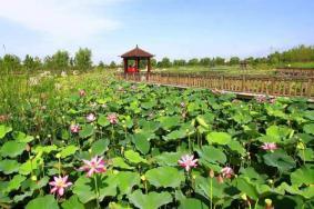 2019年武汉东湖公