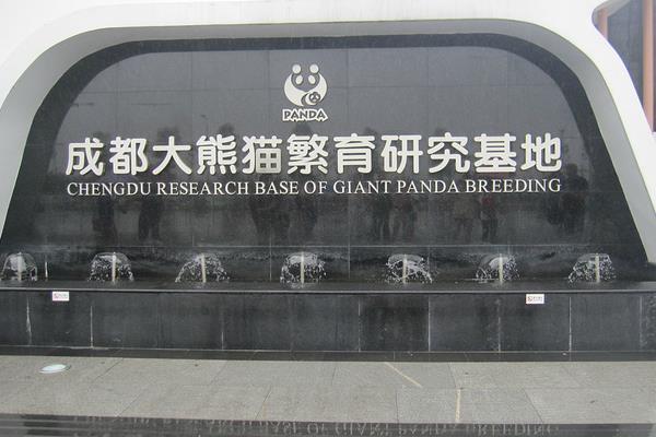 成都大熊猫繁育研究基地游玩攻略