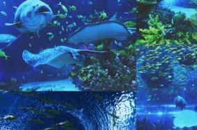 2019上海海昌海洋公园暑期游玩攻略