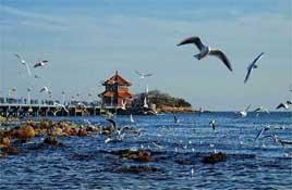 青島旅游景點_青島旅游攻略_青島美食攻略_旅泊網