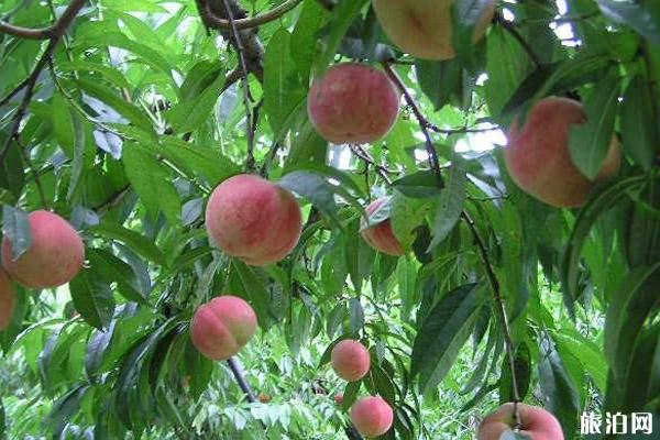 日本东京水果市场攻略