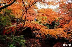 京都红叶季2019时