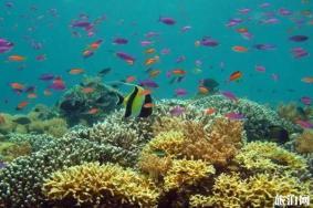 马来西亚潜水胜地