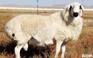 亚布力涮羊肉介绍 亚布力涮羊肉的特色