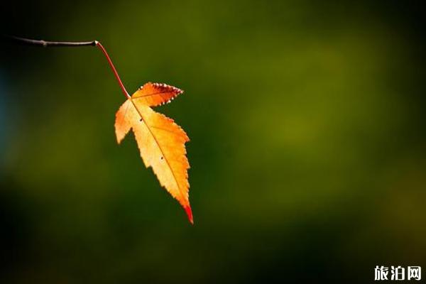 秋季树叶拍摄小技巧