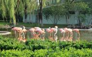 石家庄市动物园景点介绍 石家庄市动物园交通路线