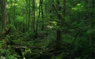 三块石国家森林公园怎么样 三块石国家森林公园门票 三块石国家森林公园游玩攻略