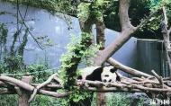南京紅山森林動物園 南京紅山森林動物園攻略 南京紅山森林動物園怎么走