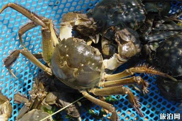 蘇州陽澄湖大閘蟹為什么這么貴
