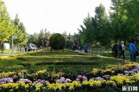 兰州植物园菊花展