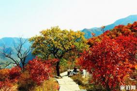 北京坡峰嶺紅葉節最佳觀賞地推薦