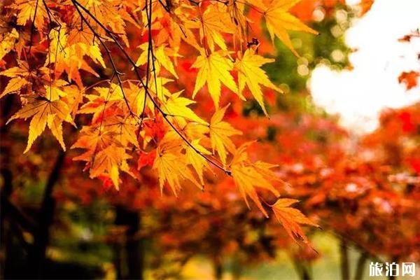 南昌秋季游玩攻略 南昌有哪些適合賞秋的地方