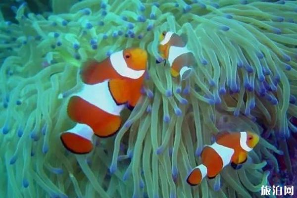 卡比勞潛水地點推薦