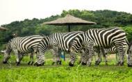 沈陽森林動物園門票多少錢 沈陽森林動物園怎么去
