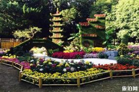 2019上海菊花展什么時候 上海有哪里舉辦菊花展