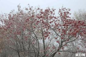 北京秋天旅游好去处 北京秋季旅游景点